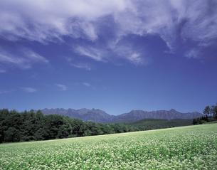 そば畑の写真素材 [FYI01926664]