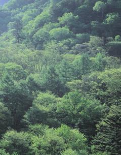 新緑の森の写真素材 [FYI01926758]