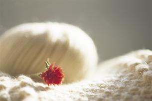 ドライフラワーと毛糸の写真素材 [FYI01927071]