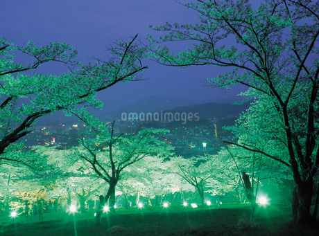 天狗山の夜桜の写真素材 [FYI01927121]