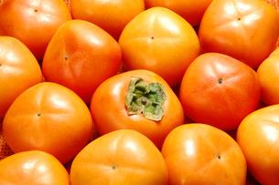一面の柿の写真素材 [FYI01927447]