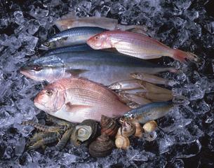 氷の上の魚介類の写真素材 [FYI01927496]