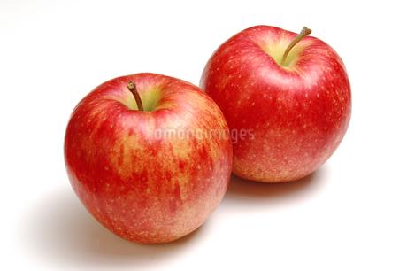 2個のリンゴの写真素材 [FYI01928417]