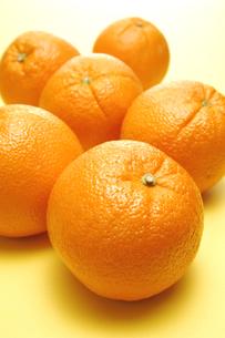 6個のオレンジの写真素材 [FYI01928500]