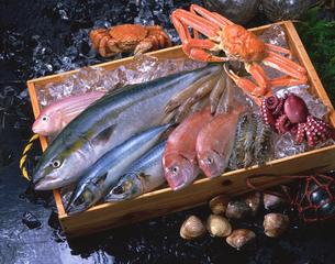 木箱の中の魚介類の写真素材 [FYI01928508]