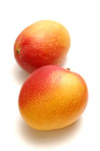 2個のマンゴーの写真素材 [FYI01928537]