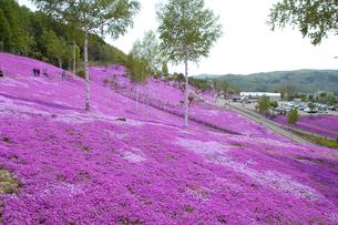 滝上公園の芝桜の写真素材 [FYI01928645]
