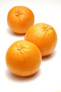 3個のオレンジの写真素材 [FYI01928845]