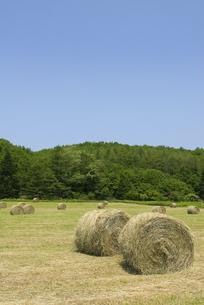 牧草ロールの写真素材 [FYI01929141]