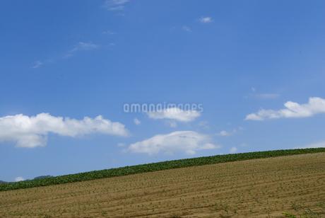 小豆畑の写真素材 [FYI01929225]