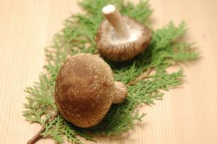 2個の椎茸の写真素材 [FYI01929359]