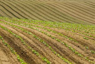 小豆畑の写真素材 [FYI01929638]