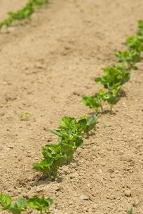 小豆畑の写真素材 [FYI01929786]