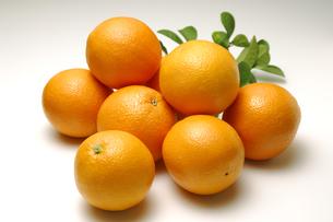 オレンジの写真素材 [FYI01929855]