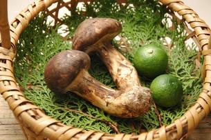2本の松茸の写真素材 [FYI01929863]