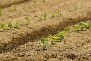 小豆畑の写真素材 [FYI01929888]