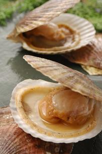 ホタテ貝の写真素材 [FYI01929996]