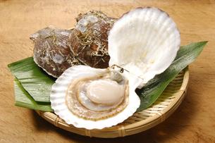 ホタテ貝の写真素材 [FYI01930172]