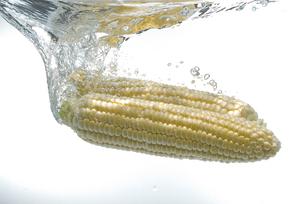 水中のトウモロコシの写真素材 [FYI01930289]