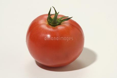 トマトの写真素材 [FYI01930515]