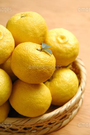 柚子の写真素材 [FYI01930527]