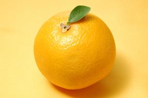 1個のオレンジの写真素材 [FYI01930745]