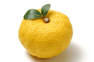 柚子の写真素材 [FYI01930853]