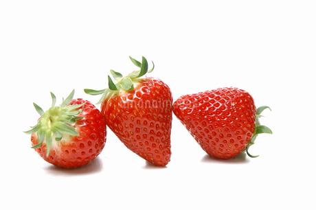 3個のイチゴの写真素材 [FYI01931111]