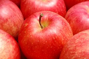 一面のリンゴ(フジリンゴ)の写真素材 [FYI01931127]