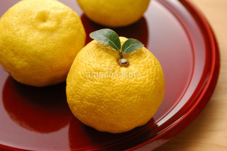 柚子の写真素材 [FYI01931358]