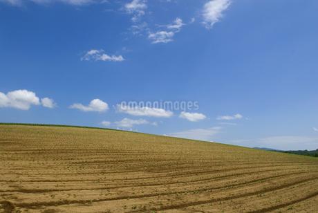 小豆畑の写真素材 [FYI01931434]