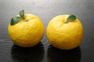 柚子の写真素材 [FYI01931573]