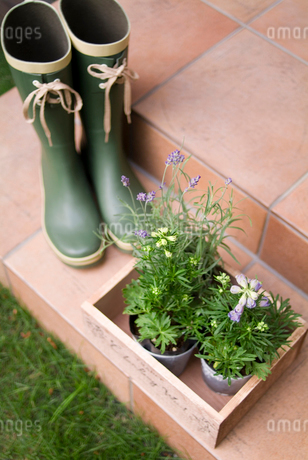 長靴と鉢植物の写真素材 [FYI01932542]