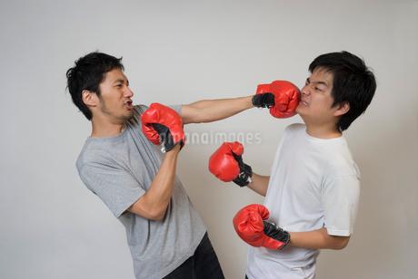 ボクシンググローブで殴りあう男性の写真素材 [FYI01936419]