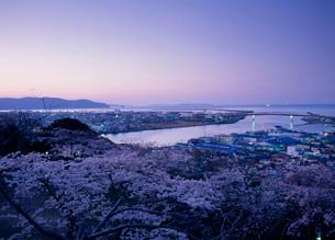 日和山公園の桜の写真素材 [FYI01939072]