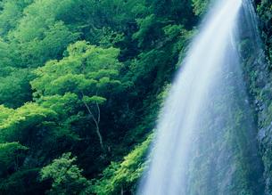 郡上市の阿弥陀ヶ滝の写真素材 [FYI01939454]