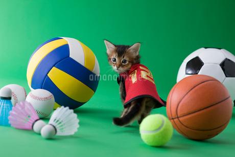 ソマリのスポーツイメージの写真素材 [FYI01941154]