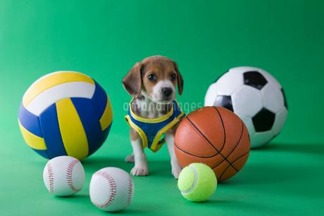 ビーグルのスポーツイメージの写真素材 [FYI01941684]