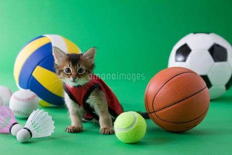 ソマリのスポーツイメージの写真素材 [FYI01942090]