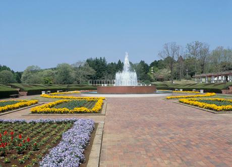 茨城県植物園の写真素材 [FYI01942811]