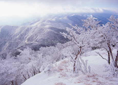 樹氷 高見山の写真素材 [FYI01943279]