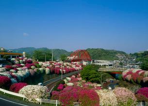 音戸大橋とツツジの写真素材 [FYI01943643]