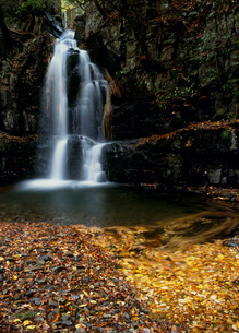 滝畑四十八滝の荒滝と落葉の写真素材 [FYI01944080]