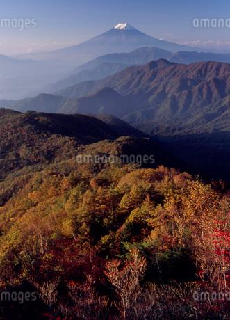 雁ヶ腹摺山から富士山の眺望の写真素材 [FYI01944361]