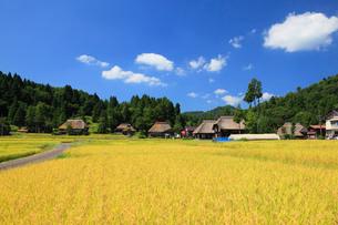荻ノ島環状かやぶき集落と稲穂の写真素材 [FYI01944971]