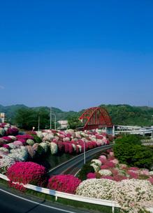 音戸大橋とツツジの写真素材 [FYI01945368]