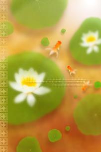 白い蓮と金魚のイラスト素材 [FYI01945829]