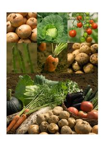 穫れたて野菜 コラージュの写真素材 [FYI01946082]