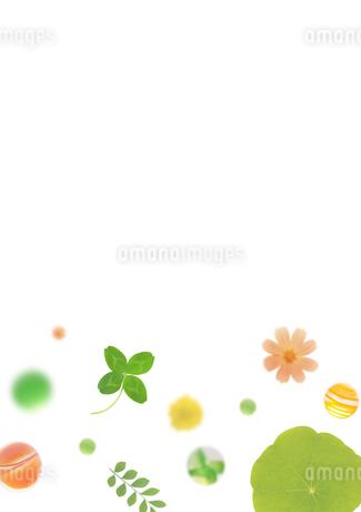 和風の植物イメージの写真素材 [FYI01946207]