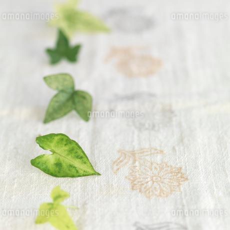 白い麻布に並べたグリーンの葉の写真素材 [FYI01946767]